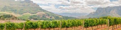 Fototapeta Panoramiczny widok z winnic w pobliżu Stellenbosch