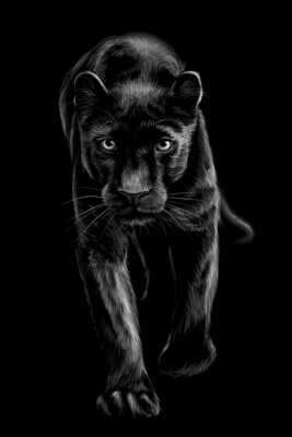 Fototapeta  Panther. Artistic, sketchy, black and white portrait of a walking panther on a black background.