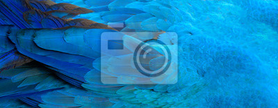 Fototapeta Papuga pióra niebieska egzotyczna tekstura