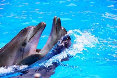 Para delfinów w niebieskim wody.