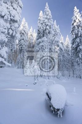 Fototapeta Park Krajobrazowy im Winter