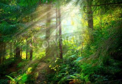 Fototapeta Park. Piękny mglisty stary las