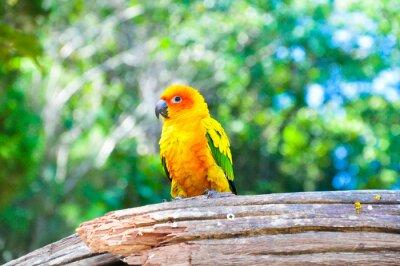 Fototapeta Parrot sitting on the perch