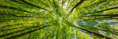 Fototapeta Patrząc na zielone wierzchołki drzew. Włochy