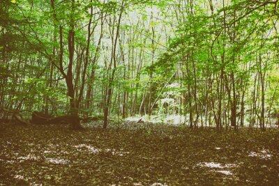 Fototapeta Patrząc przez drzewa w angielski drewna