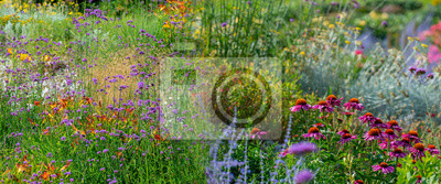 Fototapeta perennial garden flower close up in the garden