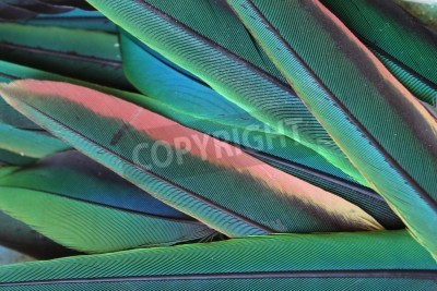 Fototapeta Photo with green parrot feathers
