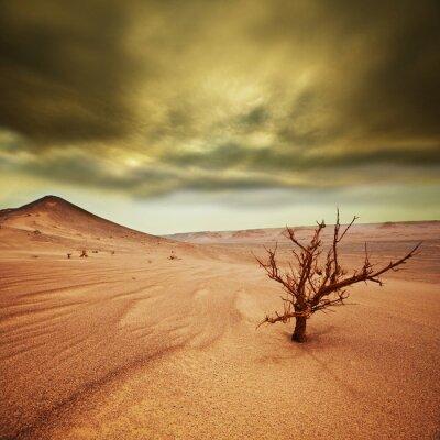 Fototapeta piasek pustyni