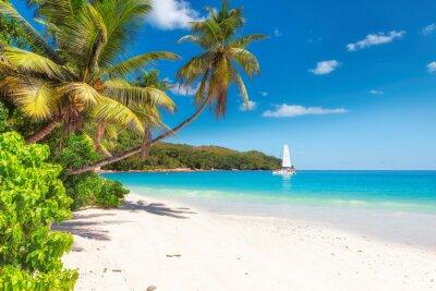 Fototapeta Piaszczysta plaża z palmami i żaglówkę na turkusowym morzu na wyspie Paradise.