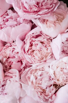 Fototapeta Piękna aromatyczna świeża kwitnie oferty różowa peoni tekstura, zamyka w górę widoku