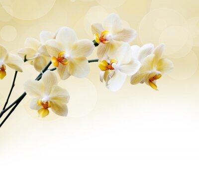 Fototapeta Piękna biała orchidea