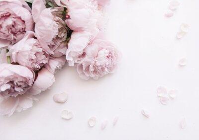 Fototapeta Piękna, delikatna świeża kwitnąca aromatyczna różowa peonia kwitnie na białym tle, odgórny widok, mieszkanie nieatutowy
