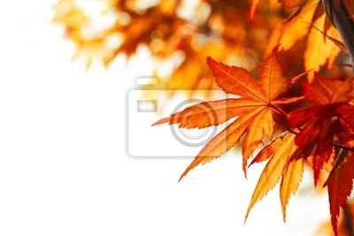 Piękna jesień liści klonu