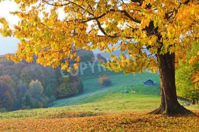 Fototapeta Piękna krajobraz z magicznymi drzewami jesienią i opadającymi liśćmi w górach (harmonia, relaks - koncepcja)