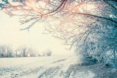 Fototapeta Piękna krajobraz zimowy krajobraz z snowy drzew i pola na słońcu, na świeżym powietrzu