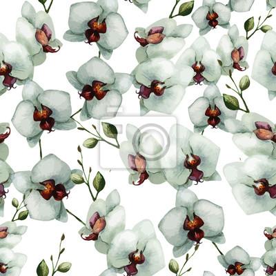 Fototapeta Piękna orchidea flower6