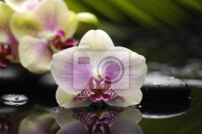 Piękna orchidea i kamienie z zielonych liści