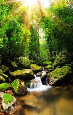 Fototapeta Piękna panorama pionowa kaskady w lesie tropikalnym Parku Narodowego Masoala na Madagaskarze