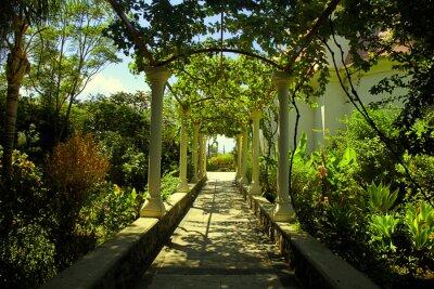 Fototapeta Piękna pergola przejście w ogrodzie letnim