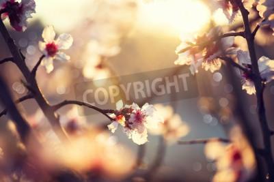 Fototapeta Piękna przyroda sceny z kwitnącego drzewa i flary słońca