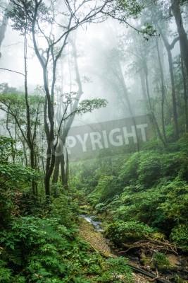 Fototapeta Piękna scena tropikalnych lasów deszczowych w Doi Inthanon National Park, Tajlandia