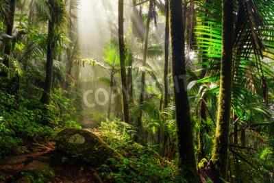 Fototapeta Piękna ścieżka dżungli przez El Yunque lasu narodowego w Puerto Rico