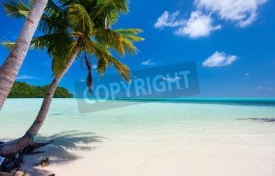 Fototapeta Piękna tropikalna plaża z palmami, biały piasek, turkusowe wody oceanu i błękitne niebo w Palau