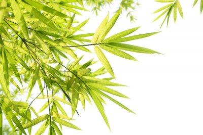 Fototapeta Piękne Bamboo Border