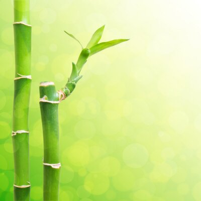Fototapeta Piękne Bamboo Granicznej