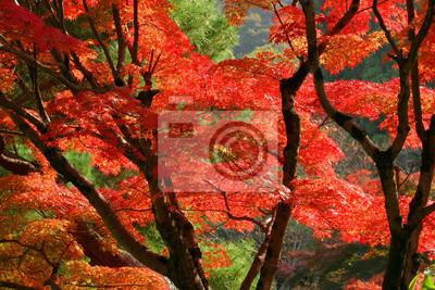 Fototapeta Piękne Czerwone Jesienne Liście