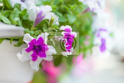 Fototapeta Piękne Dekoracje ślubne Delikatne Jasne Kwiaty W