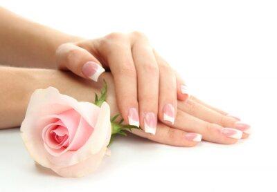 Fototapeta Piękne dłonie kobiety z różą, na białym tle