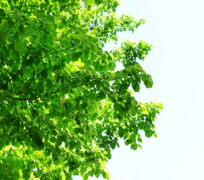 Fototapeta Piękne drzewa w lesie