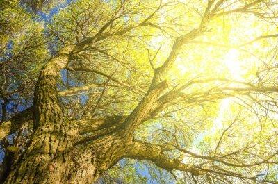 Fototapeta Piękne drzewa w parku