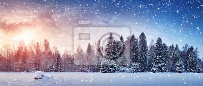 Fototapeta Piękne drzewa w zimowy krajobraz w późnym wieczorem w śniegu