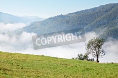 Fototapeta piękne górski krajobraz z przeciwmgielnych w dolinie