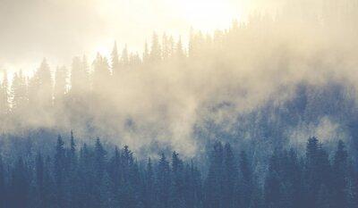 Fototapeta piękne górskie lasy pokrywające z dużą ilością mgły.