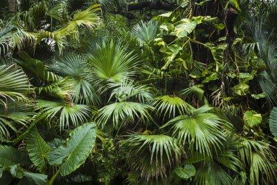 Fototapeta piękne liści palmowych drzewa w sunlight