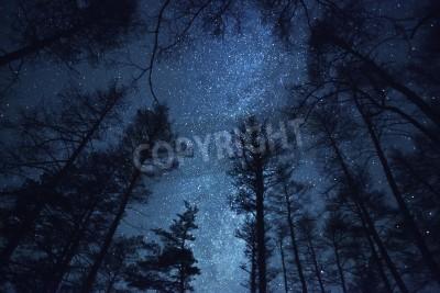 Fototapeta piękne nocne niebo, Droga Mleczna, a drzewa