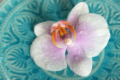 Fototapeta Piękne orchidea na niebieskim tle