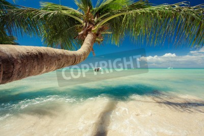 Fototapeta Piękne palmy na Morzu Karaibskim