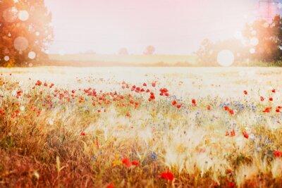 Fototapeta Piękne pole makowe na zachód słońca latem tle przyrody