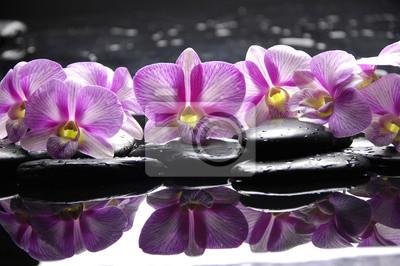 Piękne różowa orchidea z czarnych kamieni refleksji