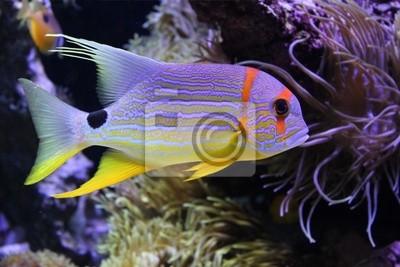 Piękne ryby w morzu