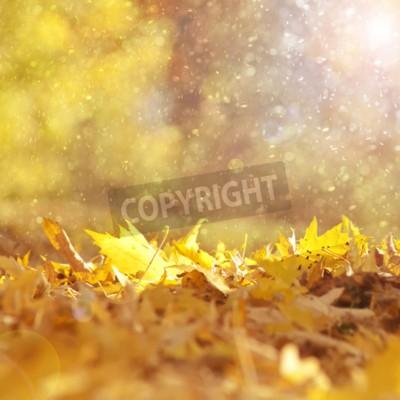 Fototapeta Piękne słoneczne i deszczowe żółty kolor jesieni pozostawia światło pochodni tle. Magiczny sezon jesień kolor liści kopia przestrzeń tła. Selektywne fokus stosowane.