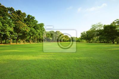 Fototapeta piękne światło poranka w publicznym parku z zielona trawa w terenie