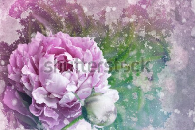 Fototapeta Piękne tło z piwonii w stylu vintage / romantyczny teksturowanej karty z piwonii