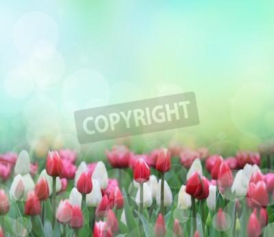 Fototapeta Piękne tulipany z bliska