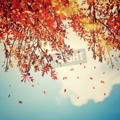 Fototapeta Piękne zabytkowe tło jesień, jesienne drzewa granicy z upadku starych liści ponad niebieskim pochmurne niebo, abstrakcyjne tło naturalnych, charakter na spadek
