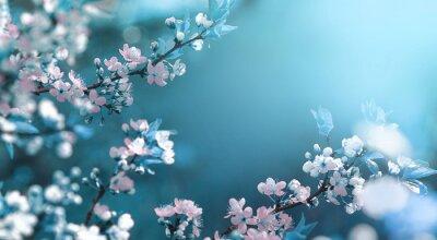 Fototapeta Pięknej kwiecistej wiosny abstrakcjonistyczny tło natura. Gałąź kwitnąć morelowego makro- z miękką ostrością na delikatnym bławym nieba tle. Na Wielkanoc i wiosnę kartki z kopii przestrzeni.